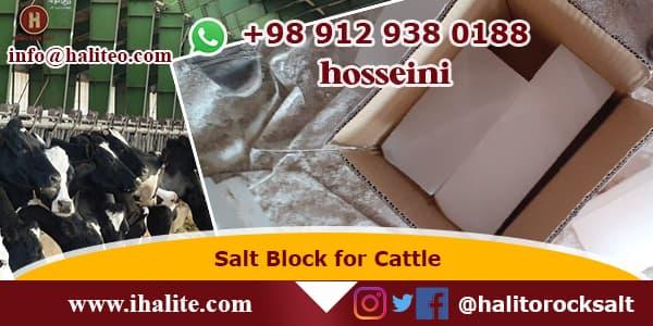 salt block for horses
