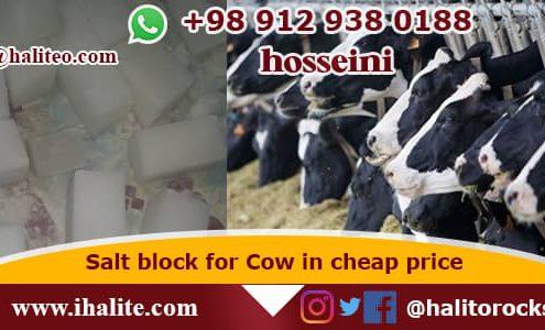 salt block for cows