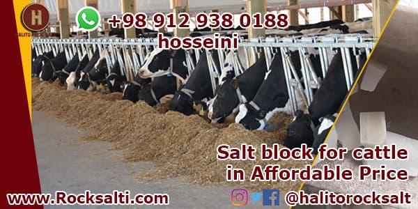 Cows rock salt