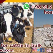cattle salt lick